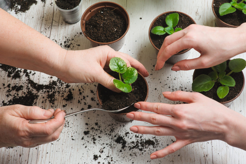 5 Air-Purifying Plants That Are Also Impossible To Kill!