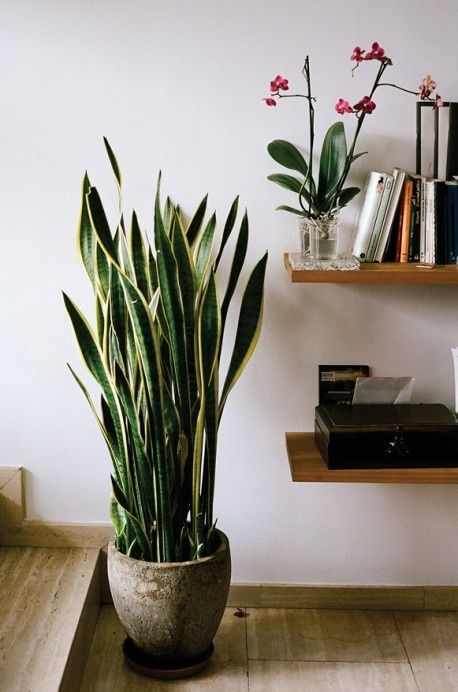 5 Air-Purifying Houseplants That Are Also Impossible To Kill!